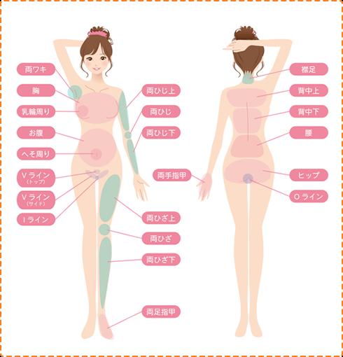 女性の脱毛部位